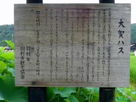 1-1大賀蓮 (5).jpg