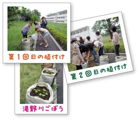 1-1滝野川ごぼう.jpg