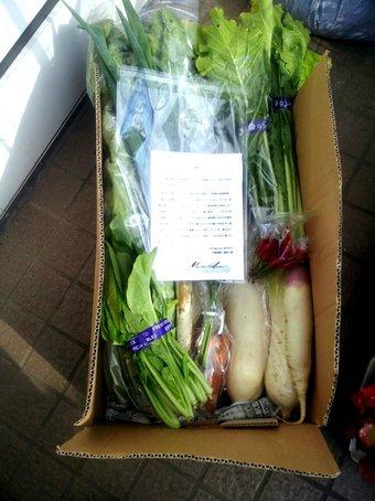 2013-12-08 野菜セット_01.jpg