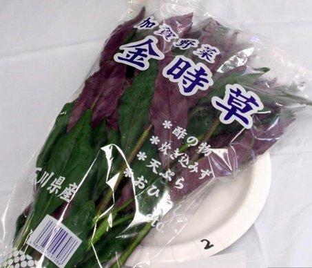 2加賀野菜.jpg