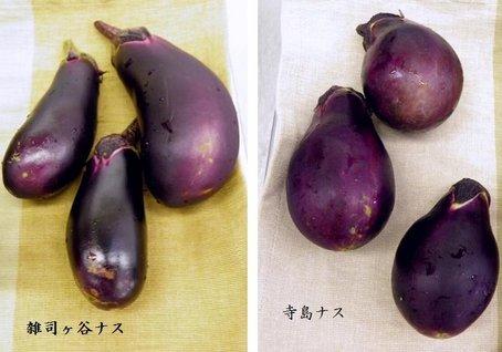 6-1寺島 (2).jpg