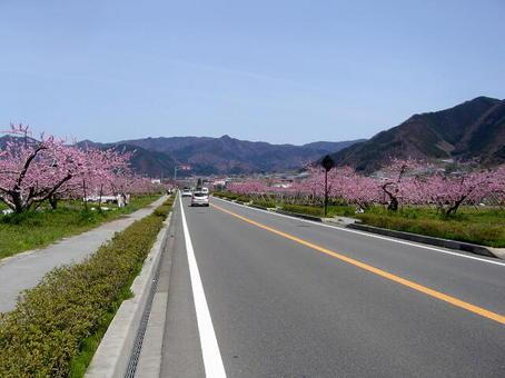 桜やへ.jpg